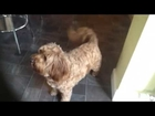 Really cute dog who is barking for a biscuit