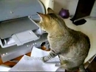 Stupid Cat vs HP Printer