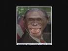 Bush en singe morphing